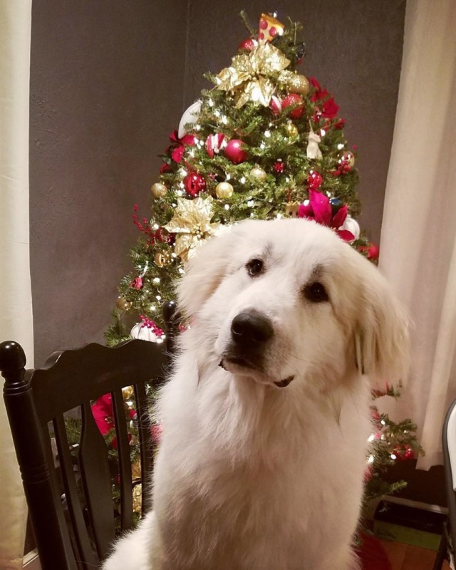 christmasdoggo