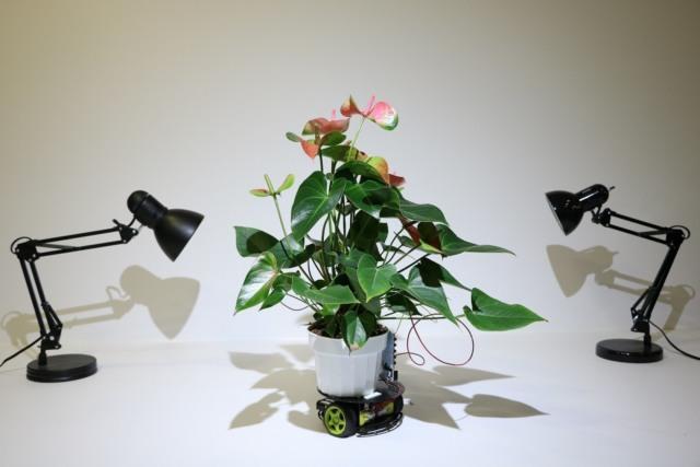 mit robotic houseplant