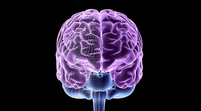 human like brain waves lab brains
