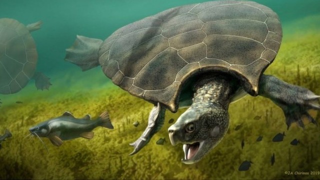 fossils of a turtle the size of a car found